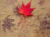 Advanced Projected Images - HC - Autumn Leaves by Pax Garabedian