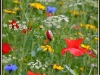 Newcomers Projected Images - First - Flower Meadow by Anne Fyfe