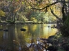 Advanced Colour Prints - HC - River Rothay Reflections by Pax Garabedian January 2013