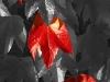 Newcomers Prints - First - Autumn Leaves by Lyndsay Goodfellow December 2012