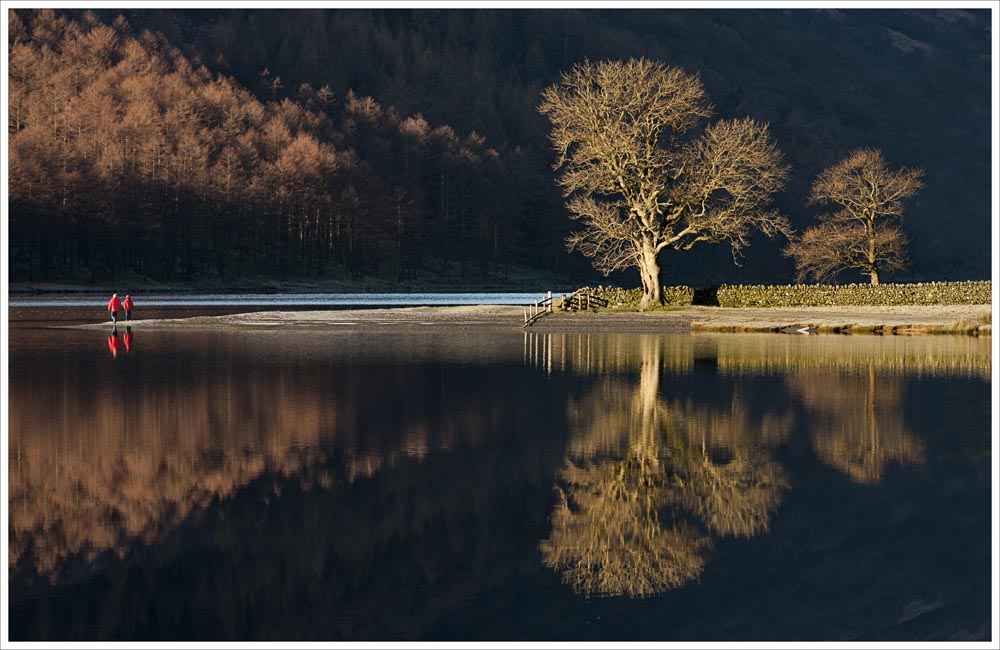 Advanced Colour Prints - Second - The Ash Tree by Alan Thomson (November 2013)