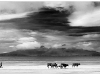 Advanced Monochrome Prints - First - Walking Home by Alan Thomson (November 2013)