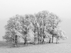 Advanced Monochrome Prints - Second - Frosty Trees by Dennis Balmer (December 2013)