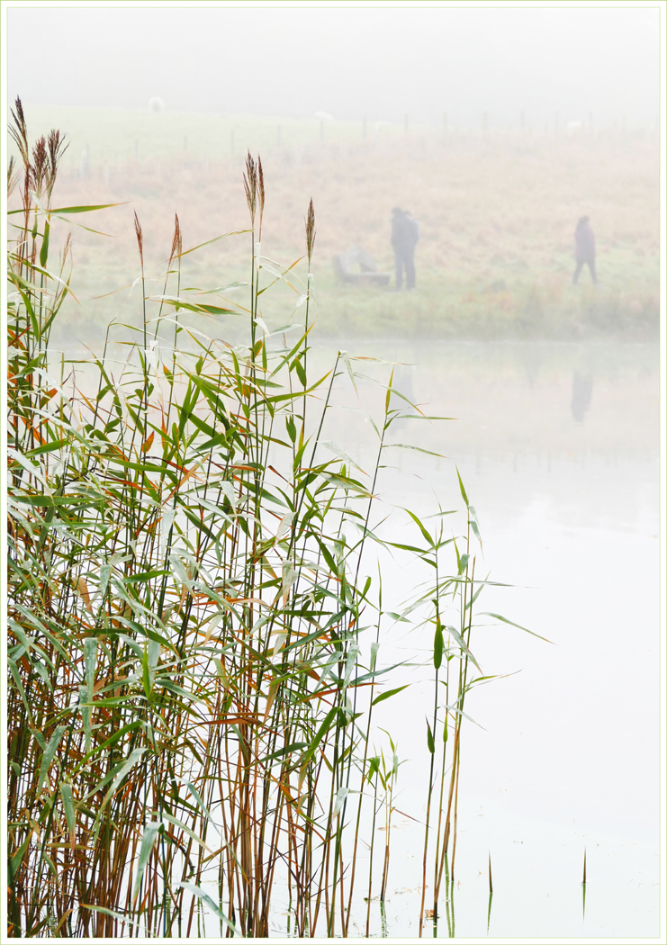 Advanced Colour Prints - HC - Tarn Reeds by Lawrence Graham (February 2016)