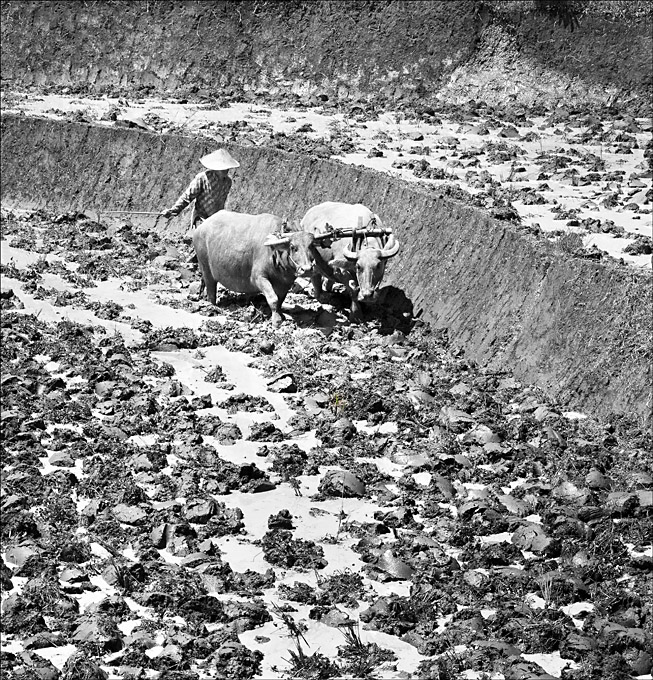Advanced Monochrome Prints - Third - Ploughman 4 by Pax Garabedian  (November 2015)