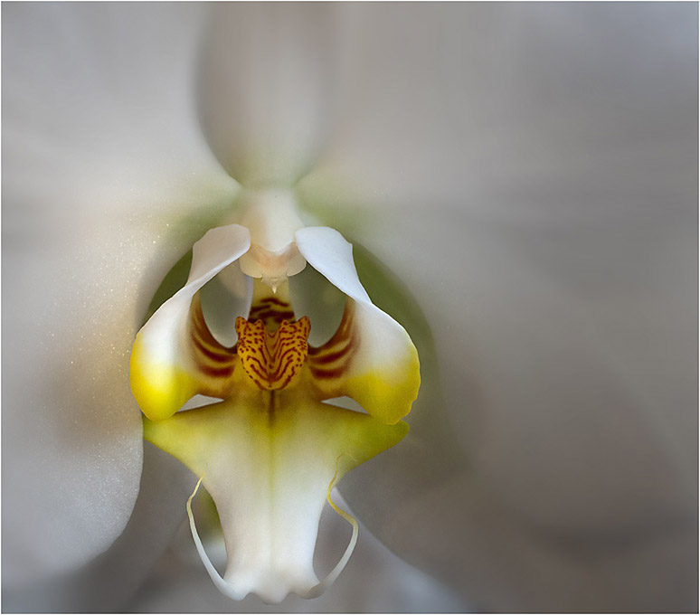 Advanced Projected Images - Third - Orchid by Pax Garabedian (December 2015)