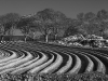 Advanced Monochrome Prints - Third - Spring Furrows by Alan Thomson (January 2016)