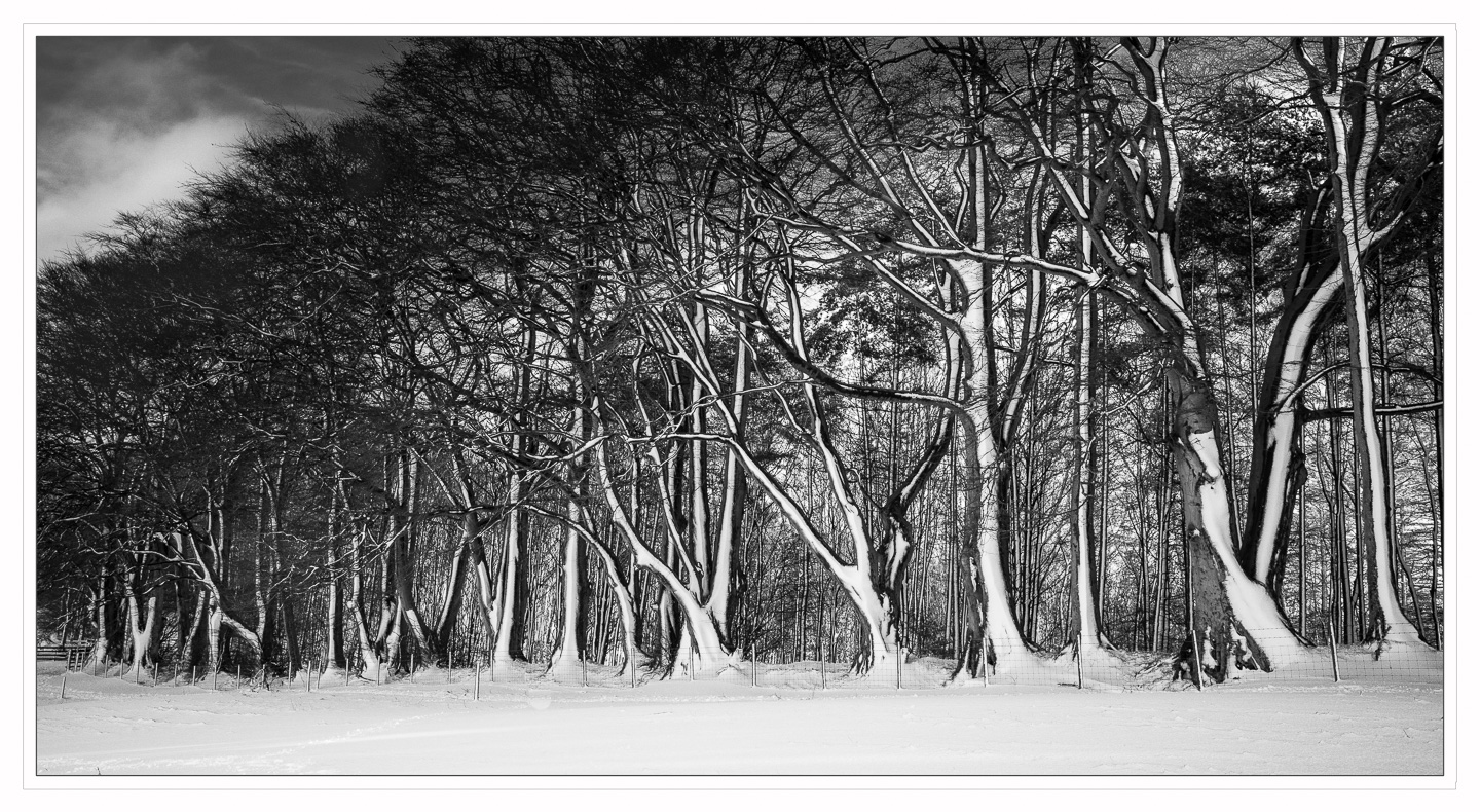 Advanced Monochrome Prints - HC - The Forest Edge by Alan Sawyer (January 2017)