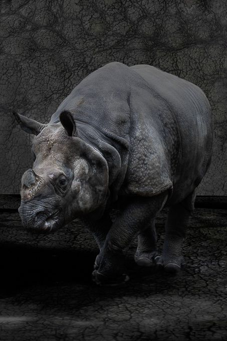 Advanced Projected Images - HC - Rhino Skin by Steve McLellan (November 2016)