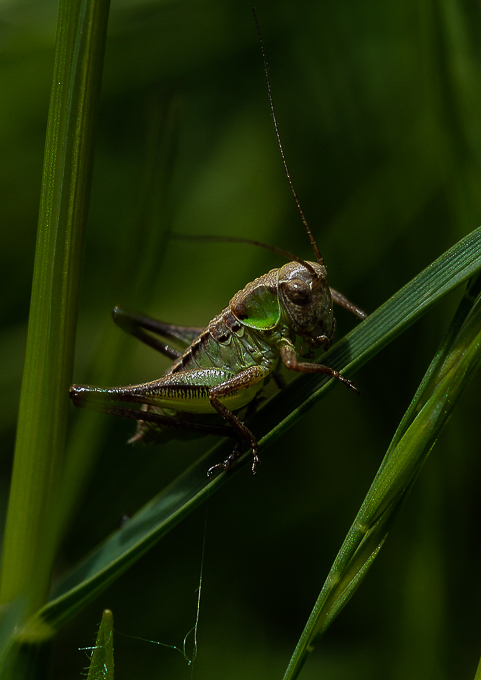 Advanced Projected Images - Second= - Grasshopper by Steve McLellan (October 2016)
