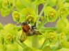 Advanced Colour Prints - HC - Tree Bumble Bee by Carrie Calvert (October 2016)