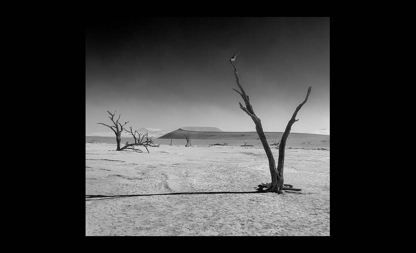Advanced Mono Prints - HC - Dead Vlei 2 by Pax Garabedian