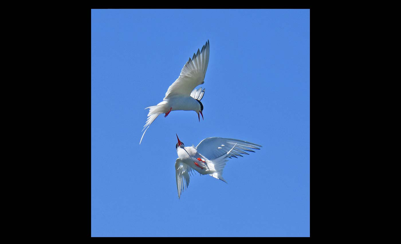 Advanced-Projected-Images-Third-Tern-Attack-by-Carrie-Calvert