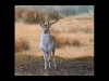 Advanced Projected Images - Third - Fallow In Autumn by Carrie Calvert