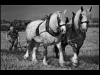 Mattinson-Cup-3rd-Alan-Thomson-Two-Horse-Power
