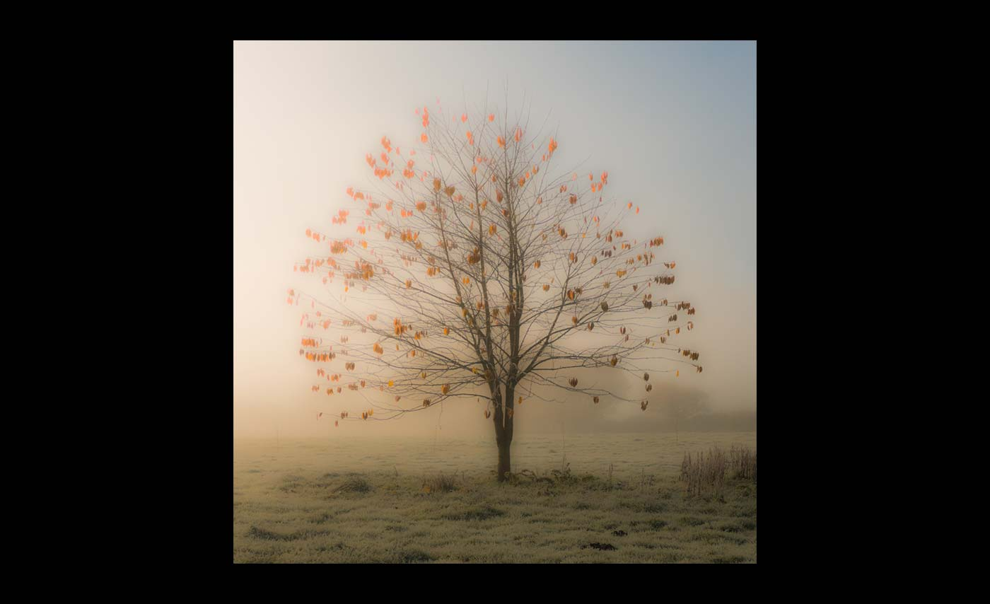 Club Class Projected Digital Images - Second - Tree in mist by Patricia Martin