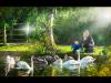 Advanced-Colour-C-Swan-Lake-Mike-Hughes
