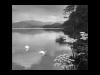 Club-Mono-3rd-Swans-Adrift-on-Ullswater-Barbara-Rowland