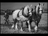 Advanced-Mono-1st-Two-Horse-Power-Alan-Thomson