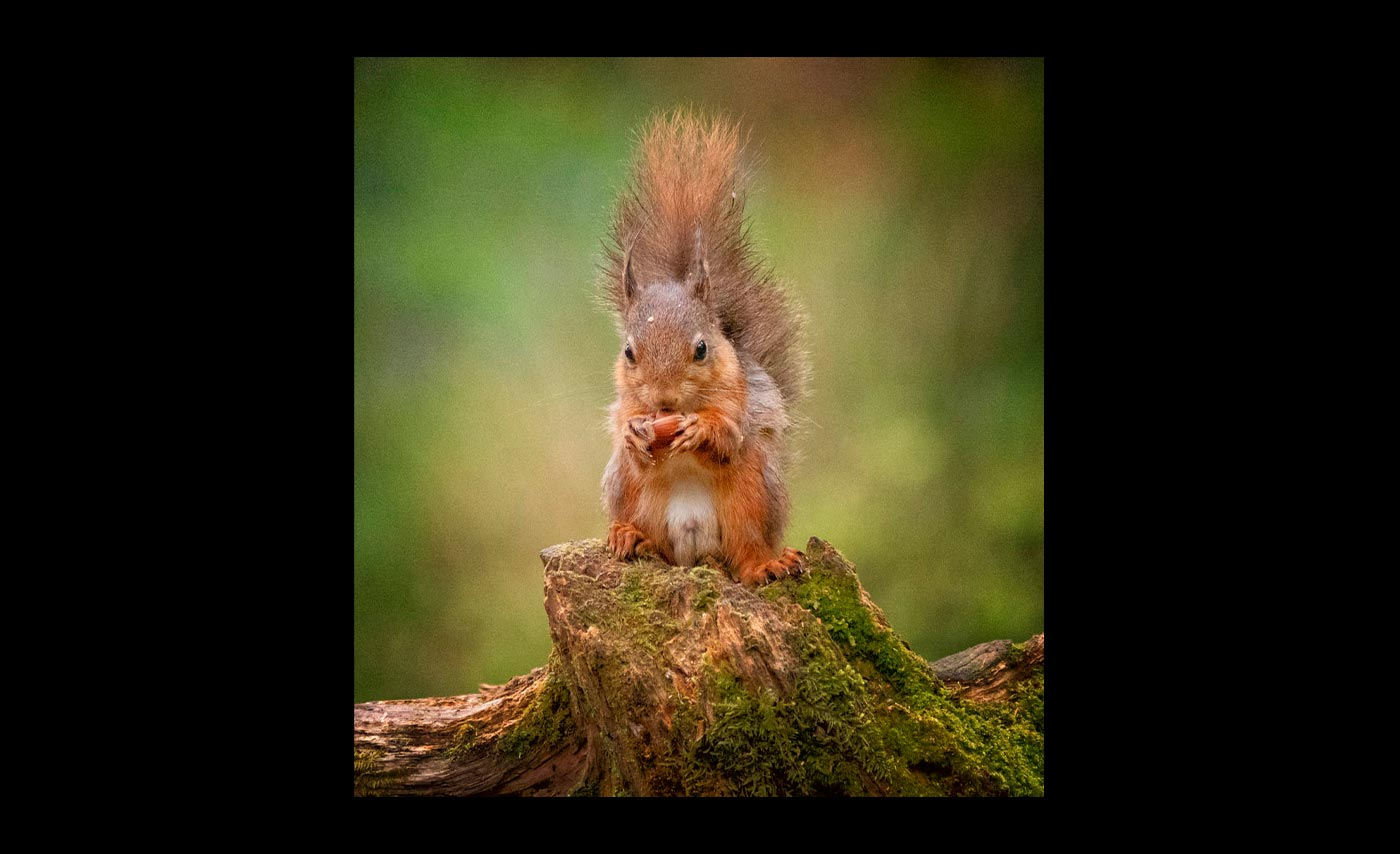 Advanced-Colour-2nd-Getting-On-With-Eating-The-Acorn-Brian-Hinvest