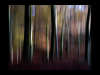 Club-Colour-C-Sunlight-And-Shade-Barbara-Rowland