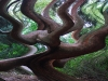 HC - Tree in Portmeirion Woods by Steven Morris