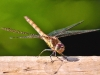 Advanced Projected Images - Third - Dragonfly Too by Graeme Fyfe
