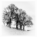 Advanced Monochrome Prints - First - Winter Trees by Tim Booth December 2012