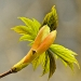 Advanced Projected Images - Second - Sycamore Bud by Tim Booth