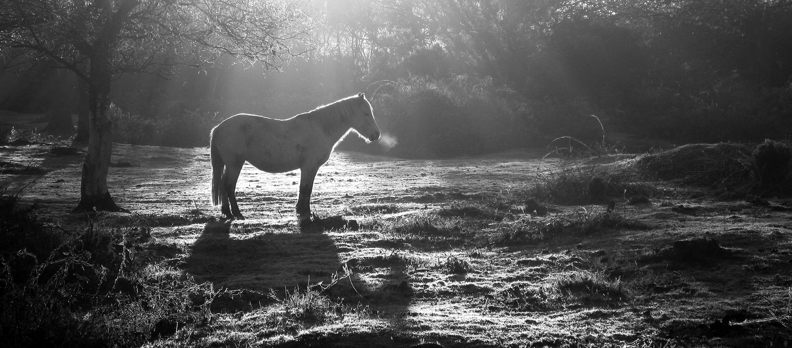 Advanced Monochrome Prints - HC - Cold Morning by Malcolm Riches