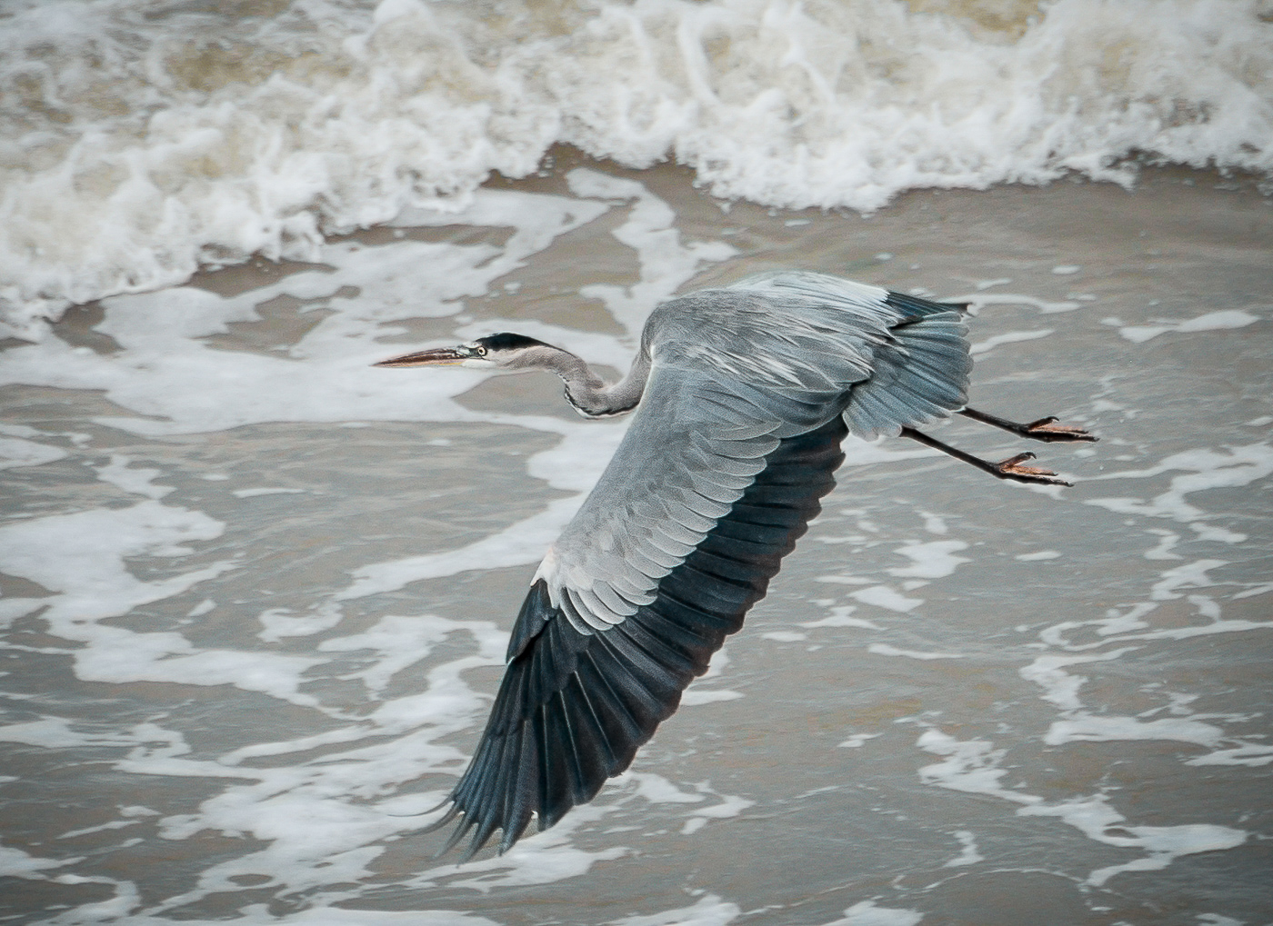 Advanced Projected Images - HC - Heron by Alan Sawyer