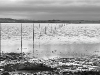 Advanced Monochrome Prints - First - St Cutherts\'s Crossing at High Tide by Tim Booth January 2013
