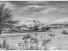 Advanced Mono Prints - HC - Bare Tree In The Snow by J Saunders