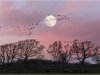 Advanced Projected Images - First - Follow The Wild Geese by Alan Thomson