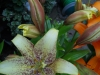 Newcomers Prints - First - Glorious Lilies by Trudi Higgins