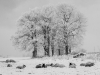 Advanced Monochrome Prints - First - Winter's Grip by Alan Thomson
