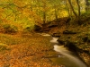 Advanced Colour Prints - HC - Autumn In Gelt Woods by Brian Hinvest