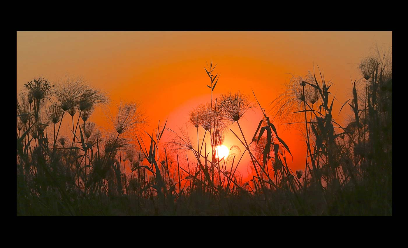 Advanced Projected Images - Second - Sunlit Grasses by Ashley French