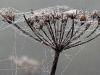 Advanced Projected Images - HC - Misty Morning Web by Geoff Coe