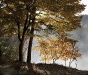 Advanced Projected Images - First - Autumn by the Lake by Pax Garabedian