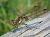 Newcomers Projected Images - First - Dragon Fly by Graham Fyfe (November 2011)