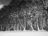 Advanced Monochrome Prints - HC - The Forest Edge by Alan Sawyer