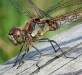 Newcomers Projected Images - Second - Dragonfly by Graeme Fyfe