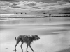 Advanced Monochrome Prints - Third  - Beach Mutt by Alan Thomson (October 2015)