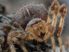 Victory Cup - Third= - Garden Spider by Roger Mepstead